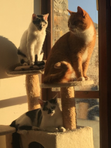 Nellie after her surgery (top perch), with her siblings